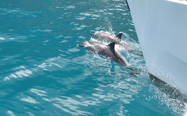 Kauai Vacation Rentals - Dolphins